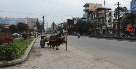 Central Ninh Binh